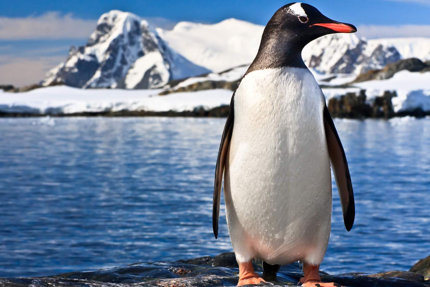 Πιγκουίνοι, 14 πράγματα που δεν ξέρατε για τα υπέροχα αυτά πλάσματα