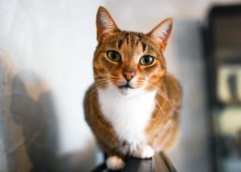 Έχετε δει ποτέ γάτα να γαβγίζει; Αν όχι δείτε εδώ!
